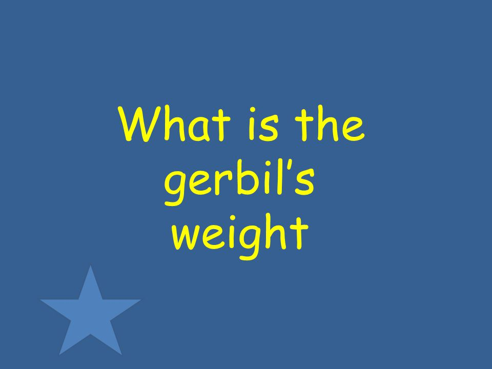 What is the gerbils weight