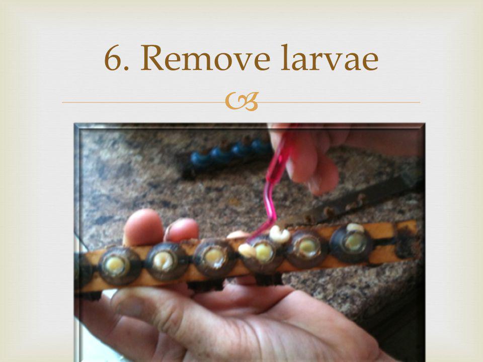 6. Remove larvae