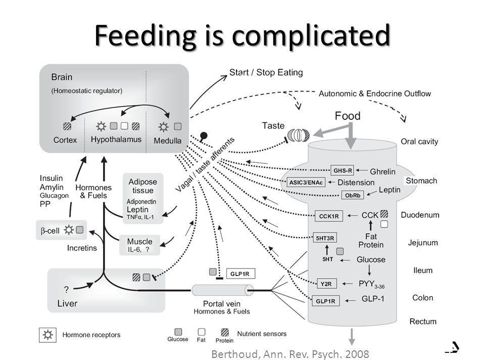 Feeding is complicated Berthoud, Ann. Rev. Psych. 2008