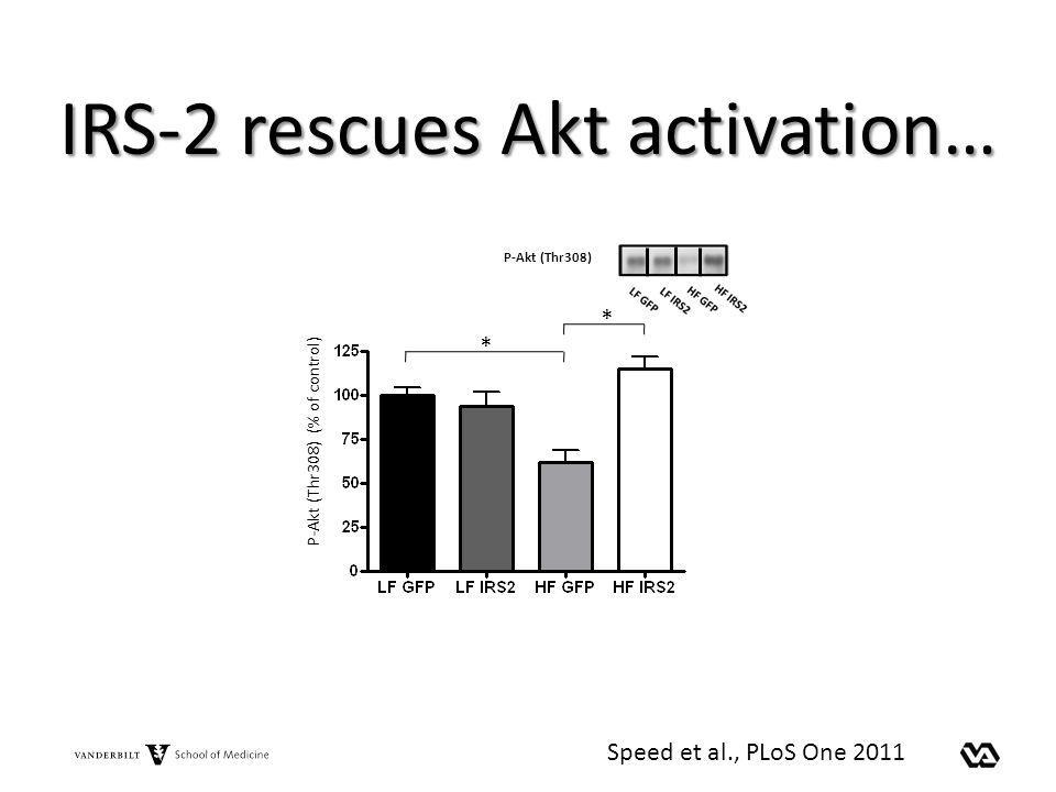 IRS-2 rescues Akt activation… P-Akt (Thr308) P-Akt (Thr308) (% of control) * * Speed et al., PLoS One 2011