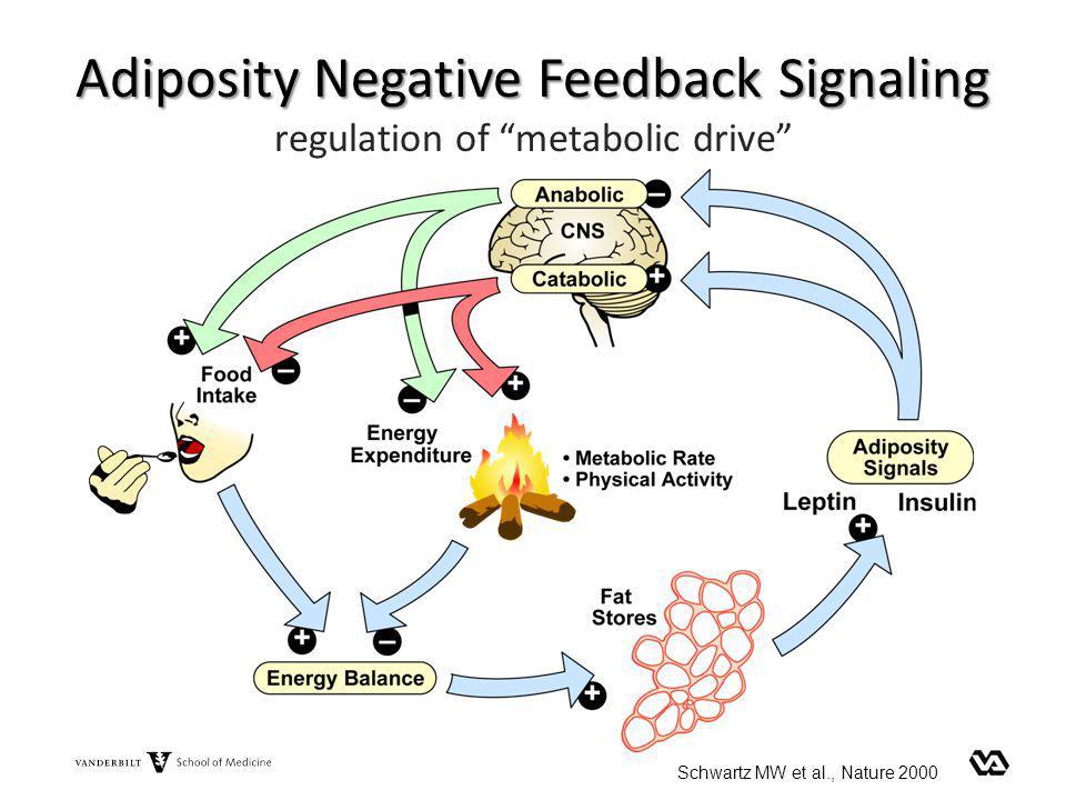 Adiposity Negative Feedback Signaling regulation of metabolic drive Schwartz MW et al., Nature 2000