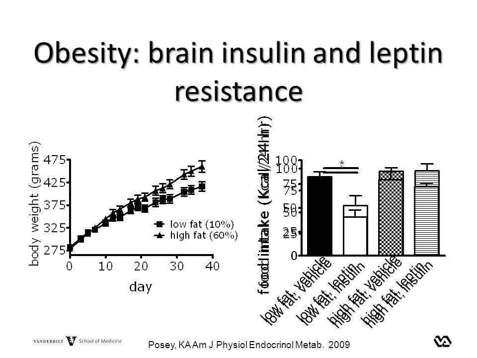 Obesity: brain insulin and leptin resistance low fat, vehiclelow fat, insulin high fat, vehiclehigh fat, insulin low fat, vehiclelow fat, leptin high