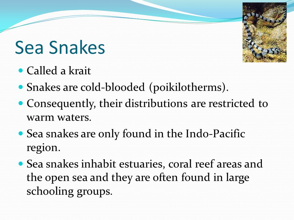 Normally, sea snakes are quite docile and dont pose a threat to humans.