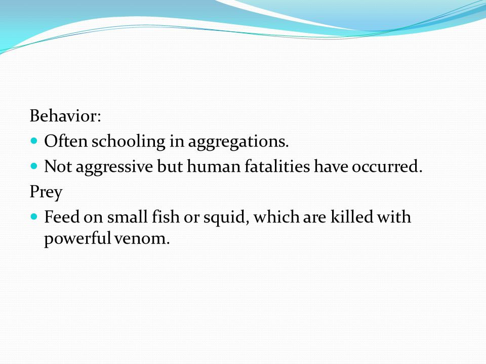 Behavior: Often schooling in aggregations. Not aggressive but human fatalities have occurred. Prey Feed on small fish or squid, which are killed with