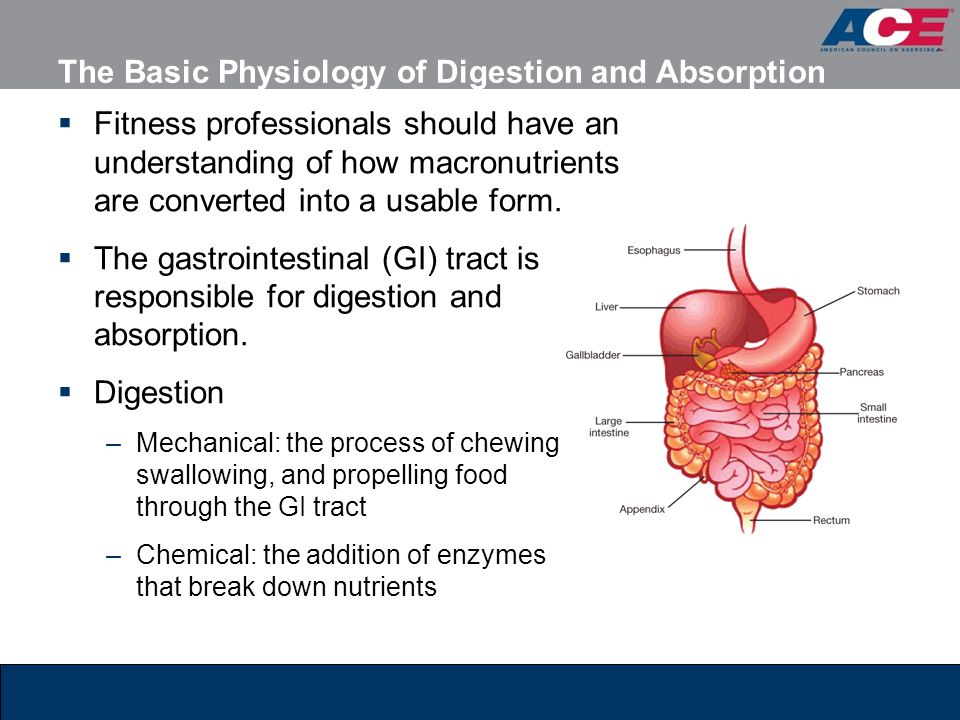 The Basic Physiology of Digestion and Absorption Fitness professionals should have an understanding of how macronutrients are converted into a usable form.