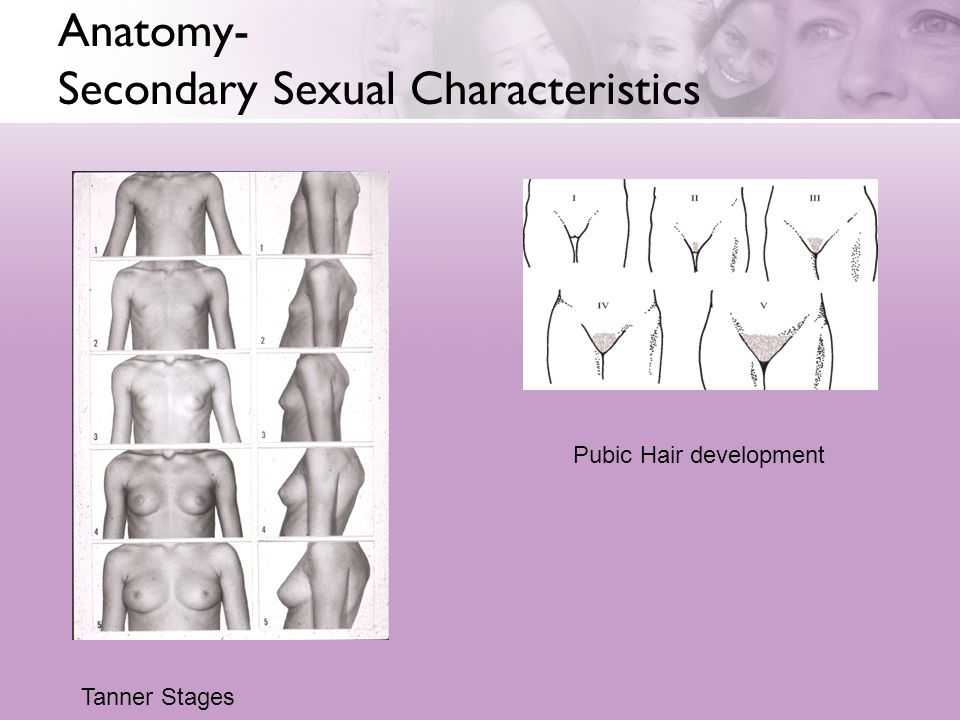 Anatomy- Secondary Sexual Characteristics Tanner Stages Pubic Hair development