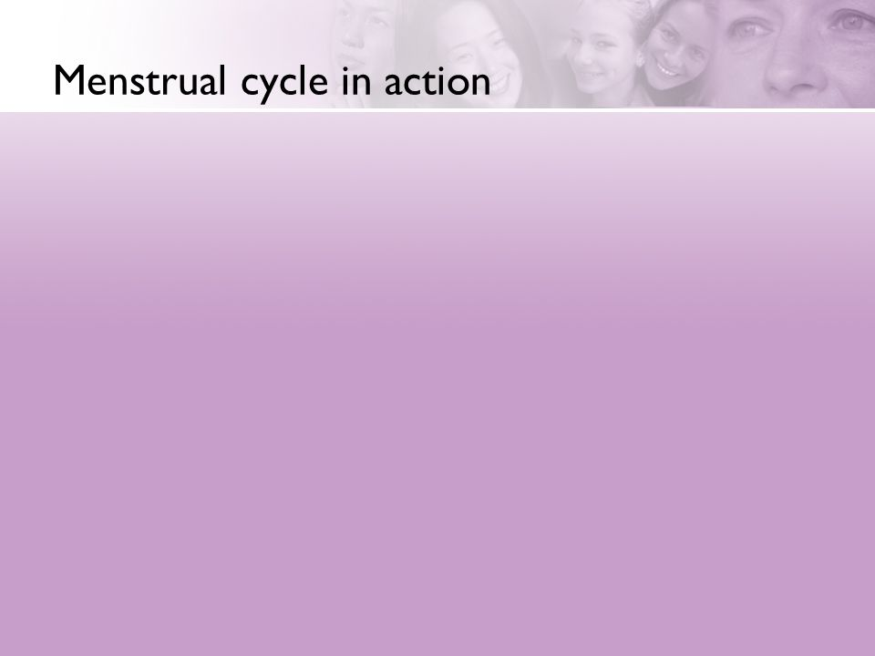 Menstrual cycle in action