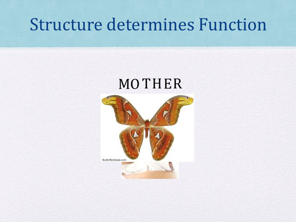 Structure determines Function MO TH E R