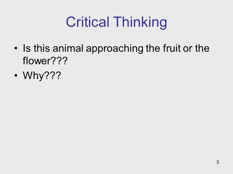 3 Critical Thinking Is this animal approaching the fruit or the flower??? Why???