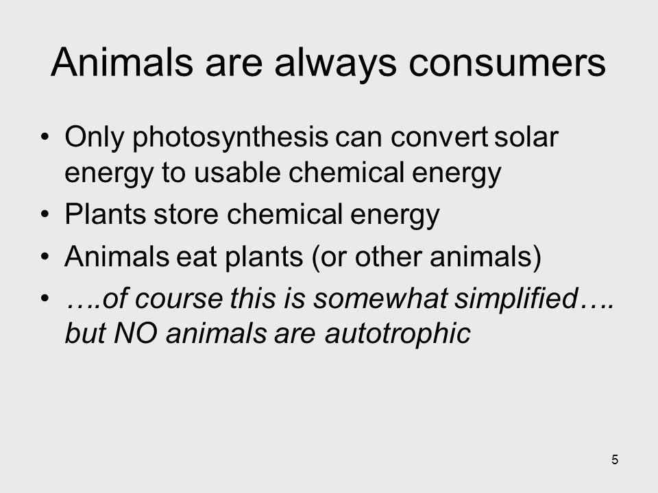 5 Animals are always consumers Only photosynthesis can convert solar energy to usable chemical energy Plants store chemical energy Animals eat plants