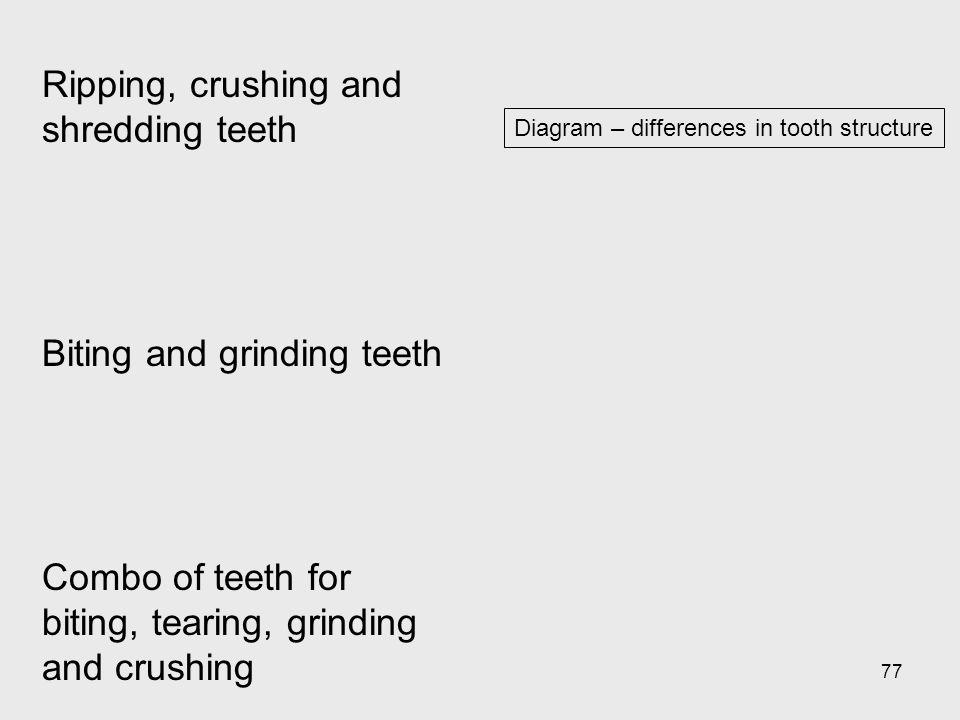 77 Diagram – differences in tooth structure Ripping, crushing and shredding teeth Biting and grinding teeth Combo of teeth for biting, tearing, grindi