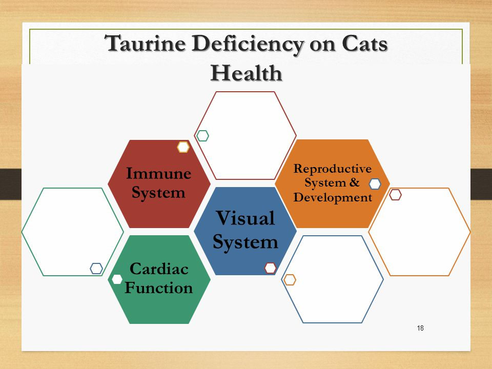 Cardiac Function Visual System Immune System Reproductive System & Development Taurine Deficiency on Cats Health 18