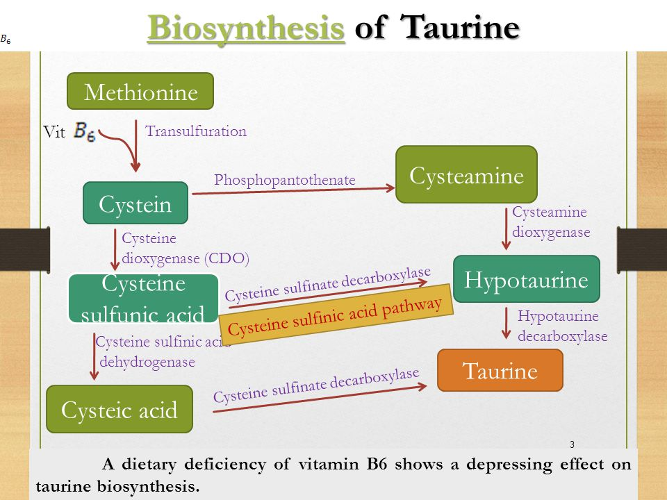Reproductive System & Development Taurine-deficient pregnant queen 1.