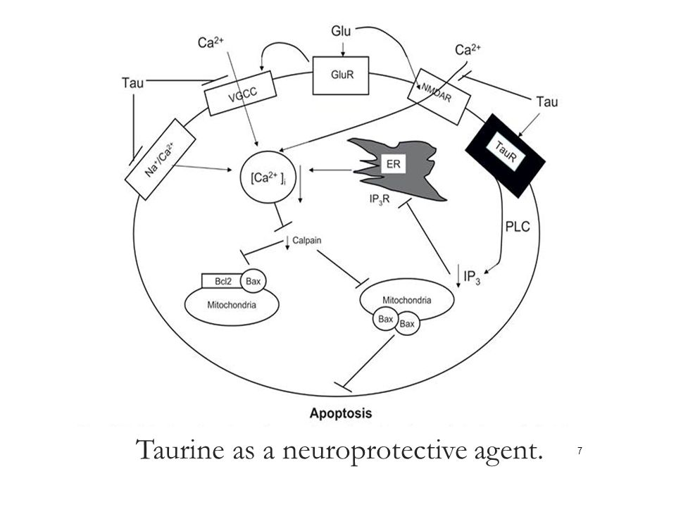 Taurine as a neuroprotective agent. 7