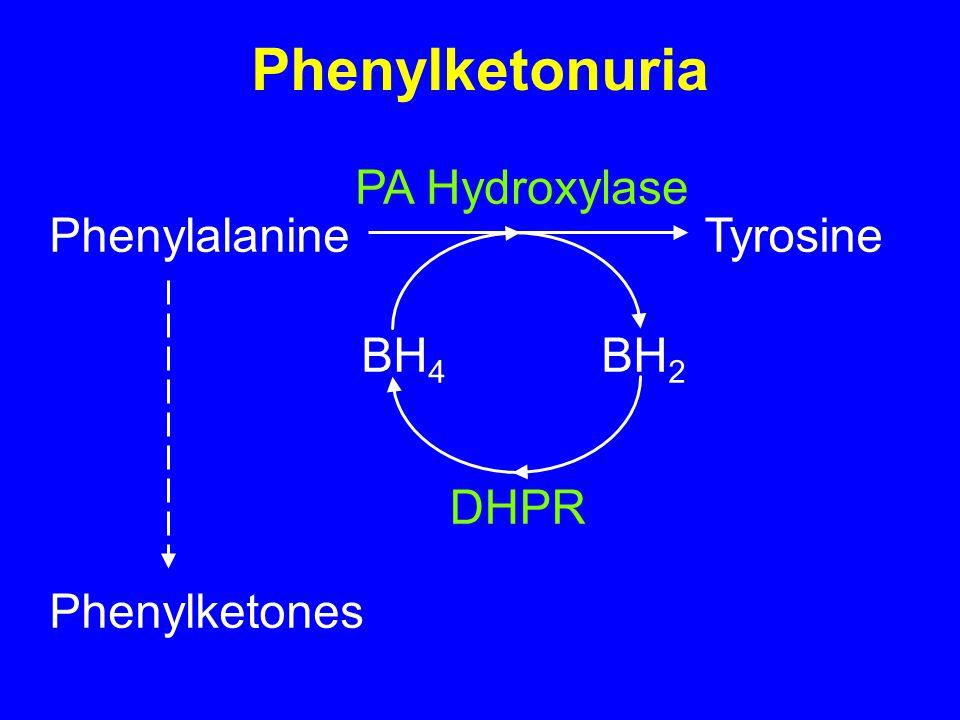 Phenylketonuria PhenylalanineTyrosine PA Hydroxylase BH 4 BH 2 DHPR Phenylketones