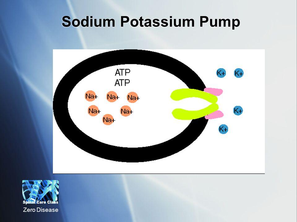 Zero Disease Sodium Potassium Pump