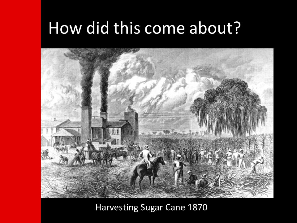 How did this come about Harvesting Sugar Cane 1870