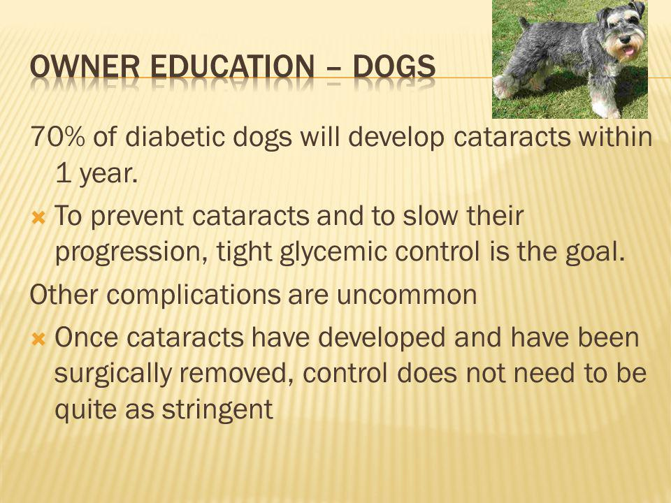 70% of diabetic dogs will develop cataracts within 1 year.