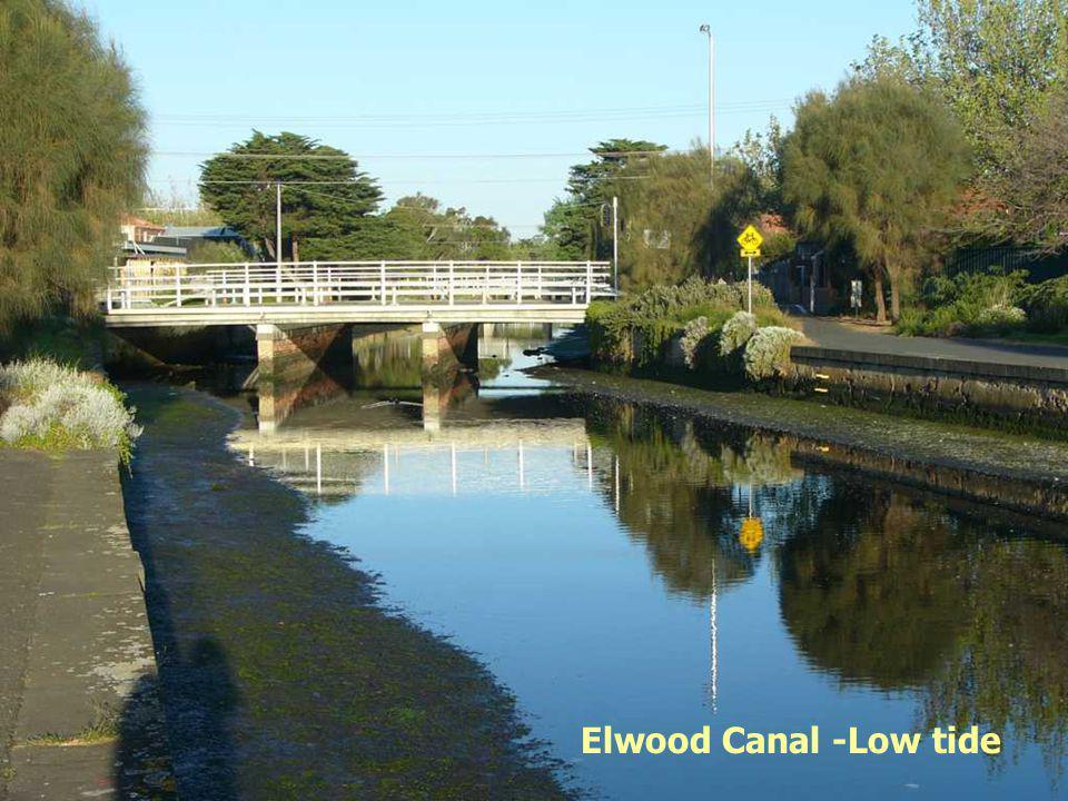 Elwood Canal -Low tide
