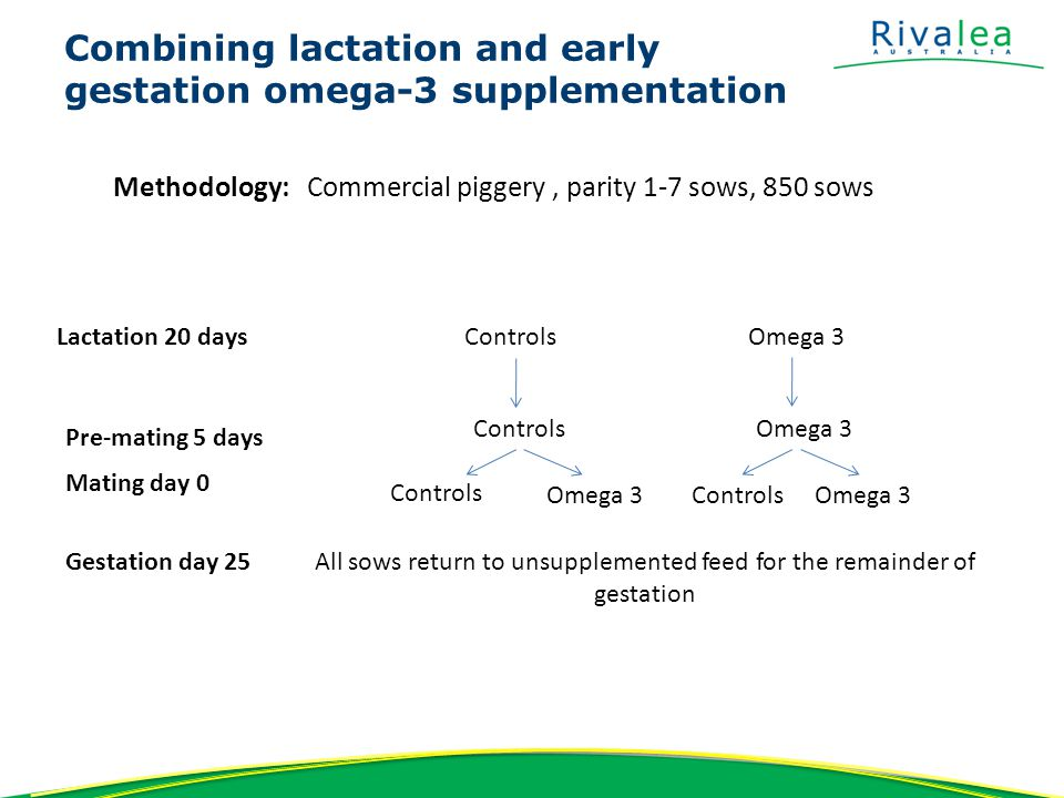 Combining lactation and early gestation omega-3 supplementation Methodology: Commercial piggery, parity 1-7 sows, 850 sows Lactation 20 daysControlsOmega 3 Pre-mating 5 days ControlsOmega 3 Mating day 0 Controls Omega 3 ControlsOmega 3 Gestation day 25All sows return to unsupplemented feed for the remainder of gestation