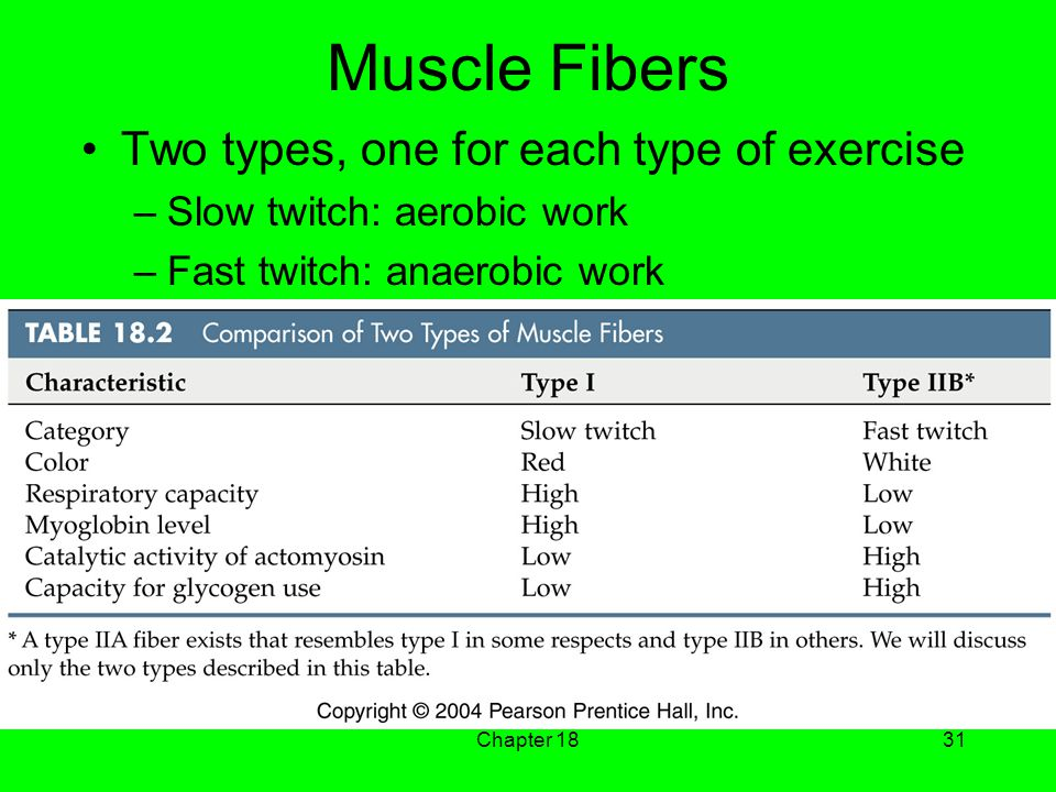 Chapter 1831 Muscle Fibers Two types, one for each type of exercise –Slow twitch: aerobic work –Fast twitch: anaerobic work