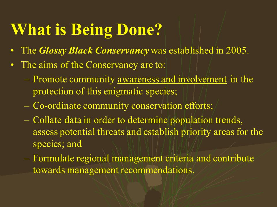 What is Being Done. The Glossy Black Conservancy was established in