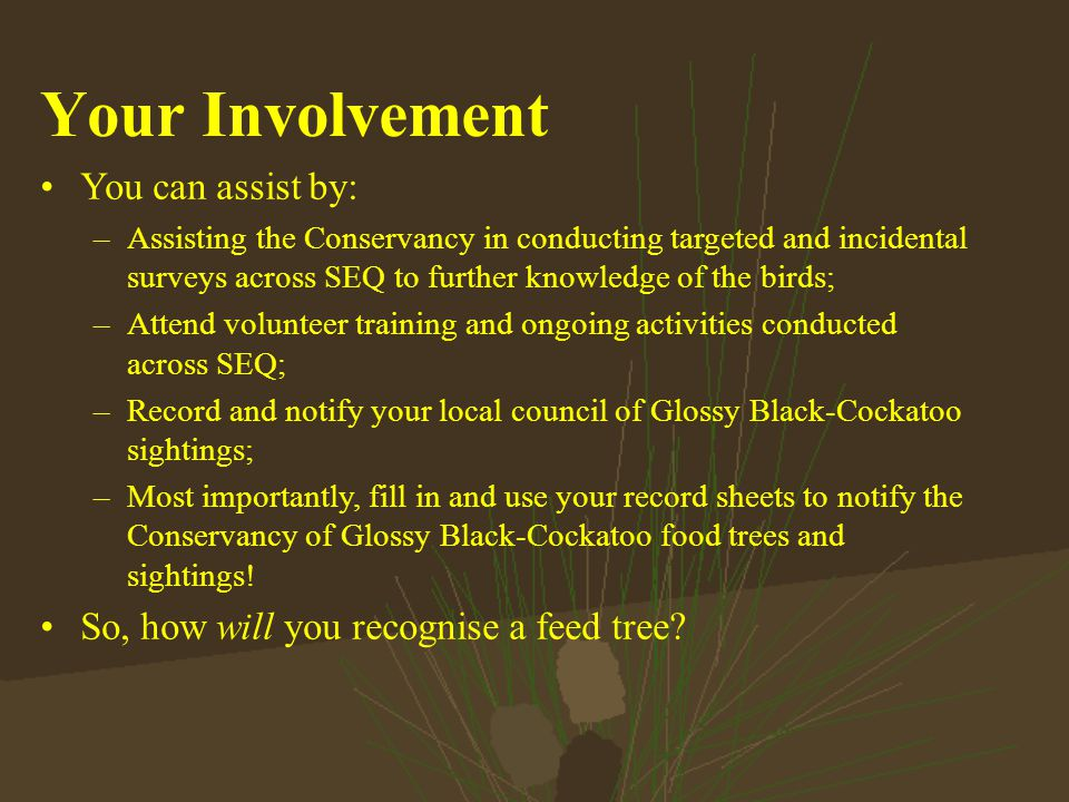 Your Involvement You can assist by: –Assisting the Conservancy in conducting targeted and incidental surveys across SEQ to further knowledge of the birds; –Attend volunteer training and ongoing activities conducted across SEQ; –Record and notify your local council of Glossy Black-Cockatoo sightings; –Most importantly, fill in and use your record sheets to notify the Conservancy of Glossy Black-Cockatoo food trees and sightings.