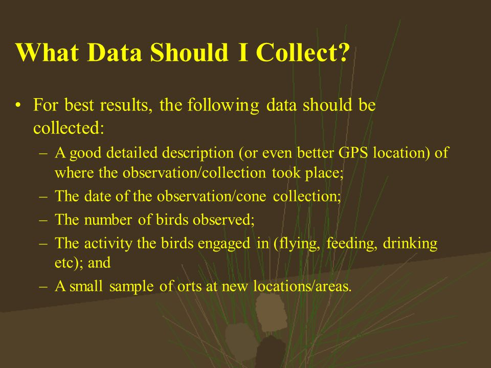What Data Should I Collect.