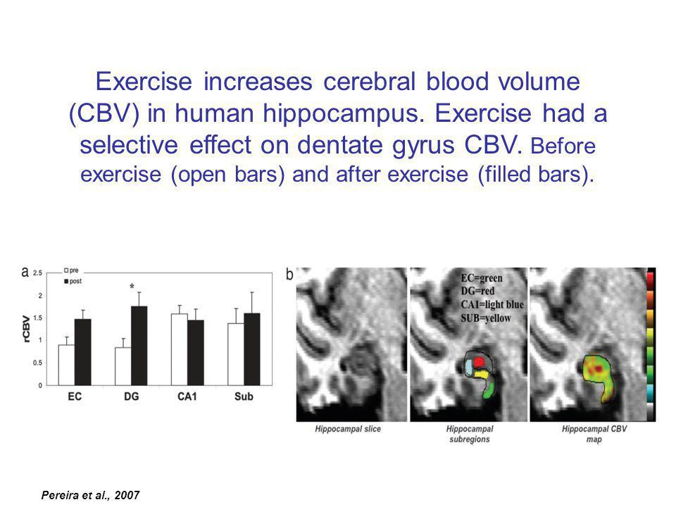 Pereira et al., 2007 Exercise increases cerebral blood volume (CBV) in human hippocampus.