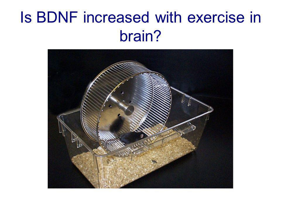Exercise increases BDNF mRNA HIPPOCAMPUS: Rats: 1 week exercise (male sprague-dawley, 3 months) Berchtold et al., 2002