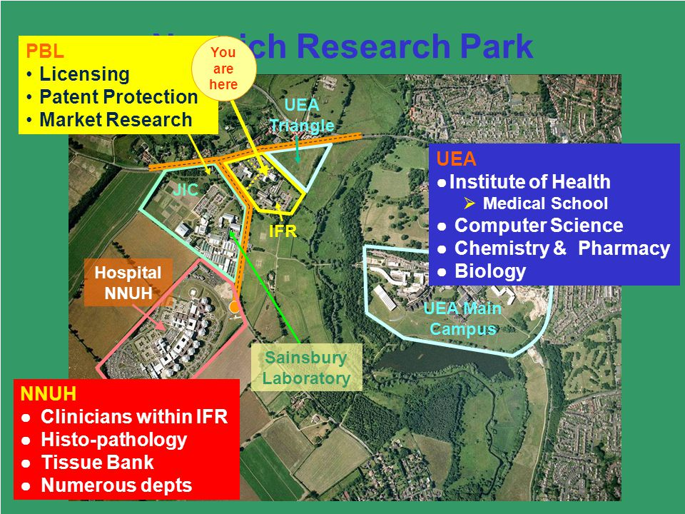 56 Norwich Research Park IFR UEA Triangle JIC Hospital NNUH UEA Main Campus PBL UEA Institute of Health Medical School Computer Science Chemistry & Pharmacy Biology PBL Licensing Patent Protection Market Research NNUH Clinicians within IFR Histo-pathology Tissue Bank Numerous depts Sainsbury Laboratory You are here