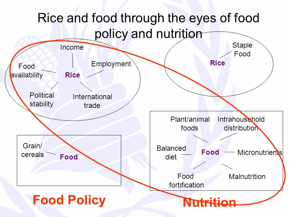 Rice and food through the eyes of food policy and nutrition Food Rice Food Policy Nutrition Employment Income Food availability Political stability International trade Grain/ cereals Rice Food Staple Food fortification Micronutrients Malnutrition Balanced diet Plant/animal foods Intrahousehold distribution
