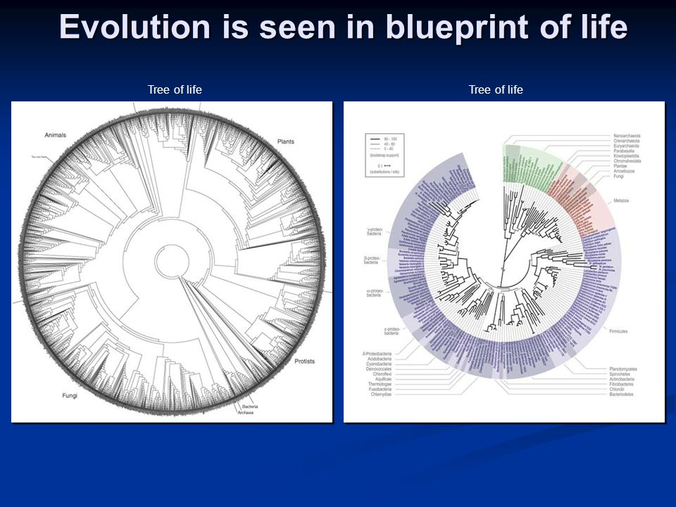 Evolution is seen in blueprint of life Tree of life