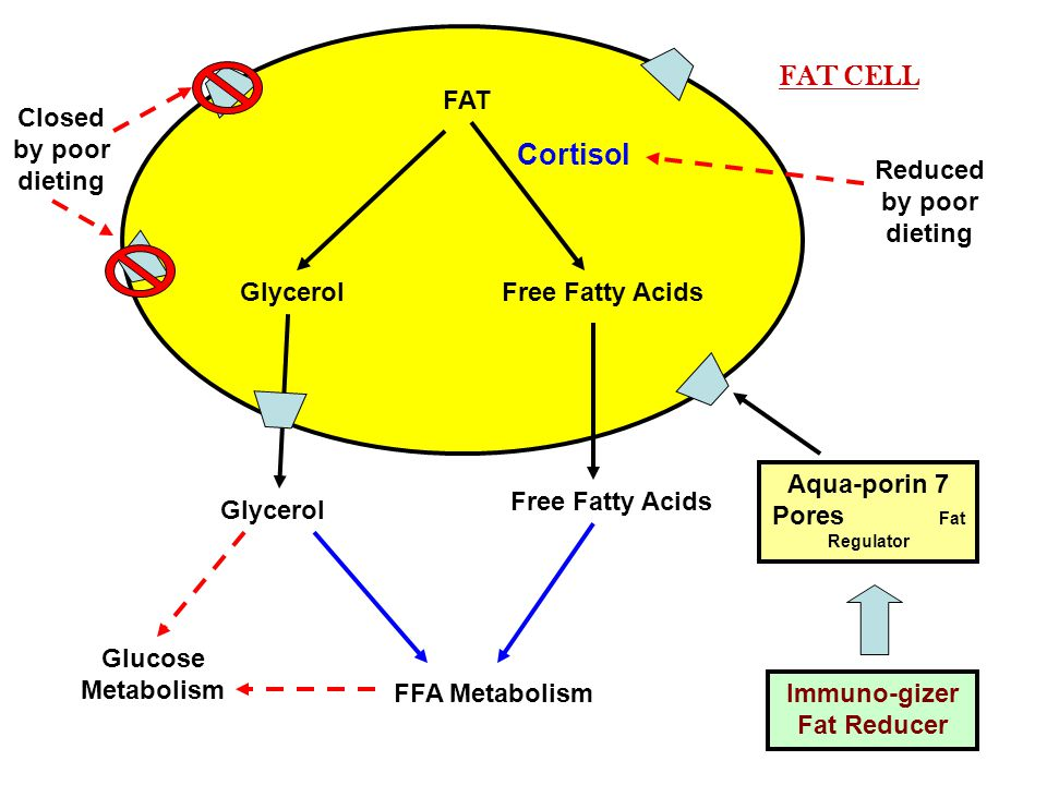 FAT GlycerolFree Fatty Acids Glycerol Free Fatty Acids FFA Metabolism Cortisol FAT CELL Aqua-porin 7 Pores Fat Regulator Closed by poor dieting Reduced by poor dieting Glucose Metabolism Immuno-gizer Fat Reducer