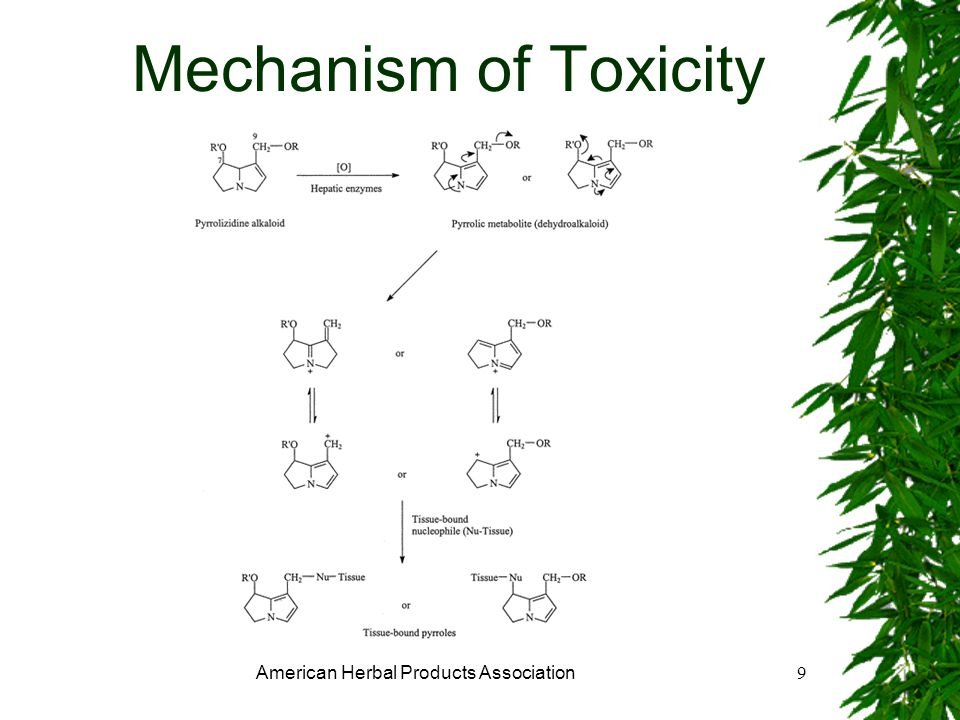 American Herbal Products Association9 Mechanism of Toxicity