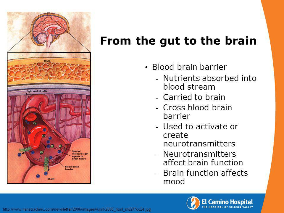 From the gut to the brain Blood brain barrier  Nutrients absorbed into blood stream  Carried to brain  Cross blood brain barrier  Used to activate