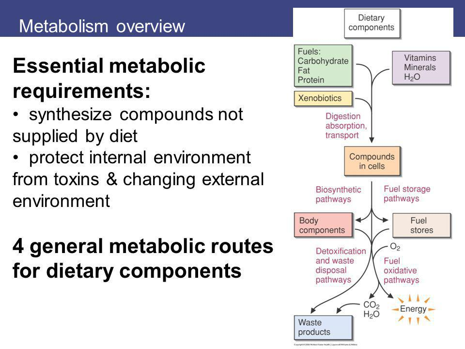Metabolism overview Essential metabolic requirements: synthesize compounds not supplied by diet protect internal environment from toxins & changing ex