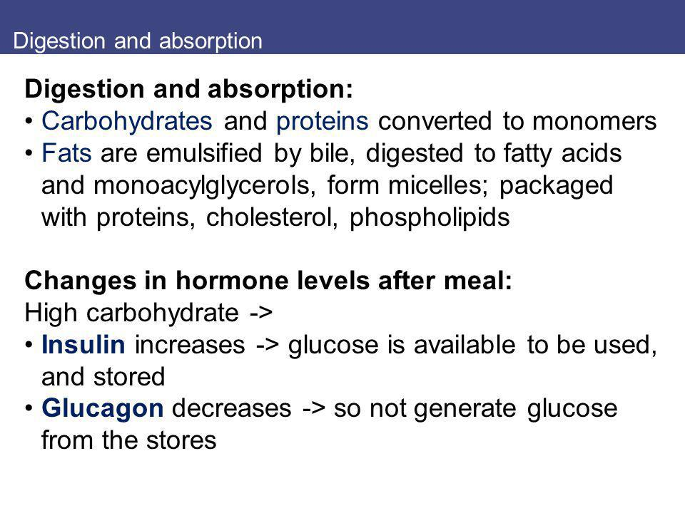 Digestion and absorption Digestion and absorption: Carbohydrates and proteins converted to monomers Fats are emulsified by bile, digested to fatty aci