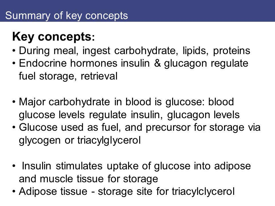 Summary of key concepts Key concepts : During meal, ingest carbohydrate, lipids, proteins Endocrine hormones insulin & glucagon regulate fuel storage,