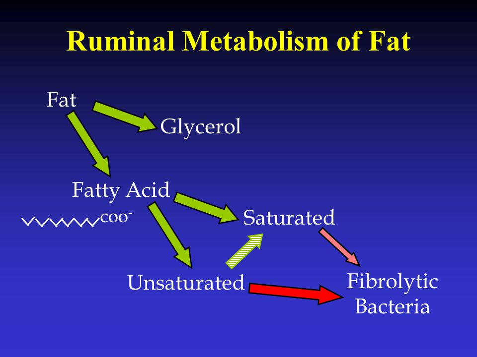 Ruminal Metabolism of Fat Fat Glycerol Fatty Acid Saturated Unsaturated Fibrolytic Bacteria coo -