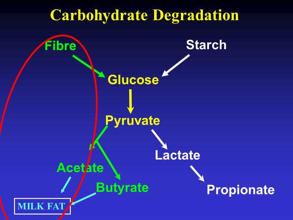 Carbohydrate Degradation Fibre Starch Glucose Acetate Propionate Lactate Butyrate Pyruvate MILK FAT