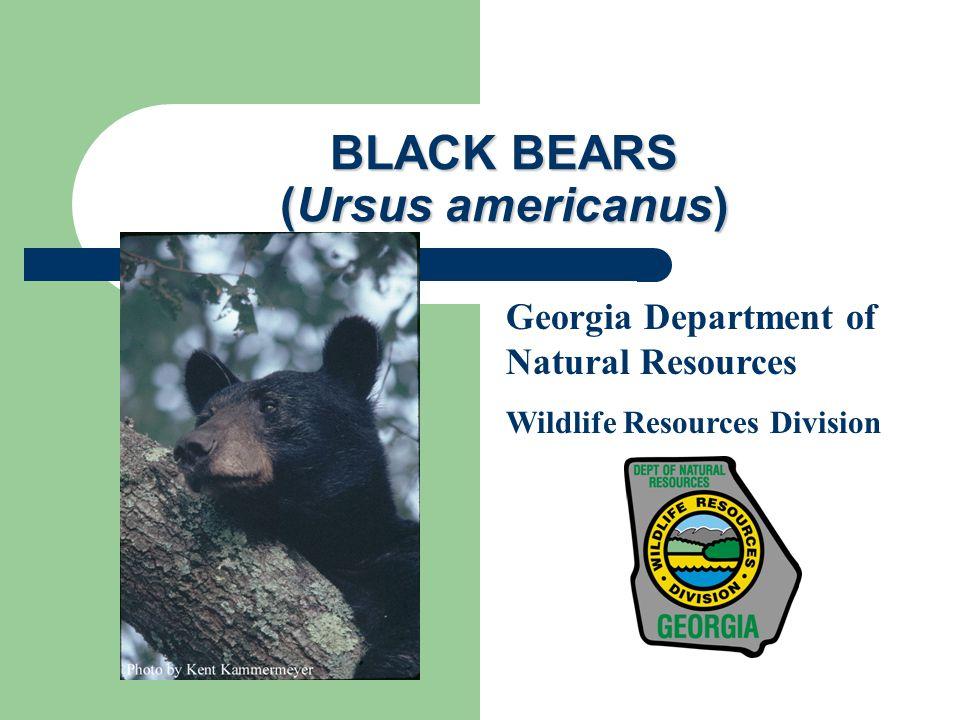 Current Black Bear Distribution Source: Pelton and van Manen (1994)