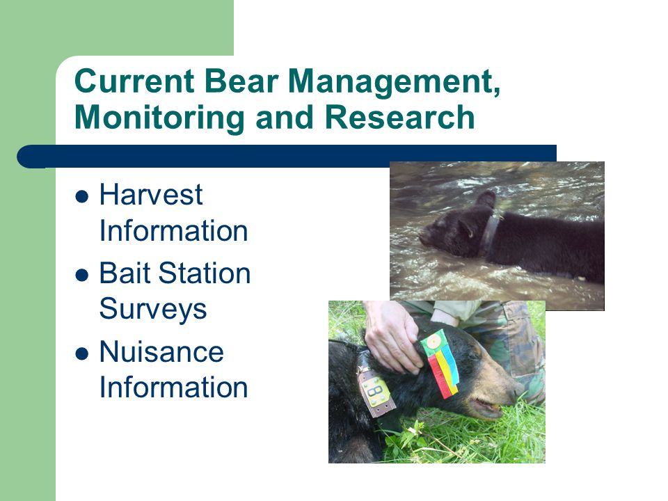 Current Bear Management, Monitoring and Research Harvest Information Bait Station Surveys Nuisance Information
