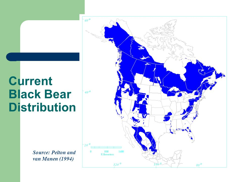 Current Black Bear Distribution Source: Pelton and van Manen (1994)