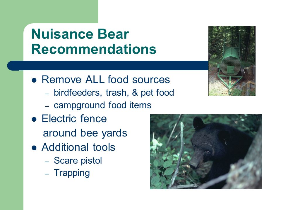 Nuisance Bear Recommendations Remove ALL food sources – birdfeeders, trash, & pet food – campground food items Electric fence around bee yards Additional tools – Scare pistol – Trapping