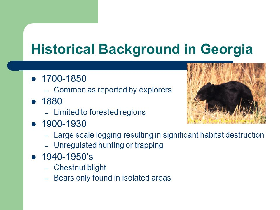 Bears in Georgia 1930s – Bear season closed by act of legislature 1930-1970 – Questionable protection – Limited habitat 1969 – Georgia Game and Fish Commission as well as hunting community realized value/importance as game species 1976 – Tri-State Bear Study launched to investigate bears in SE