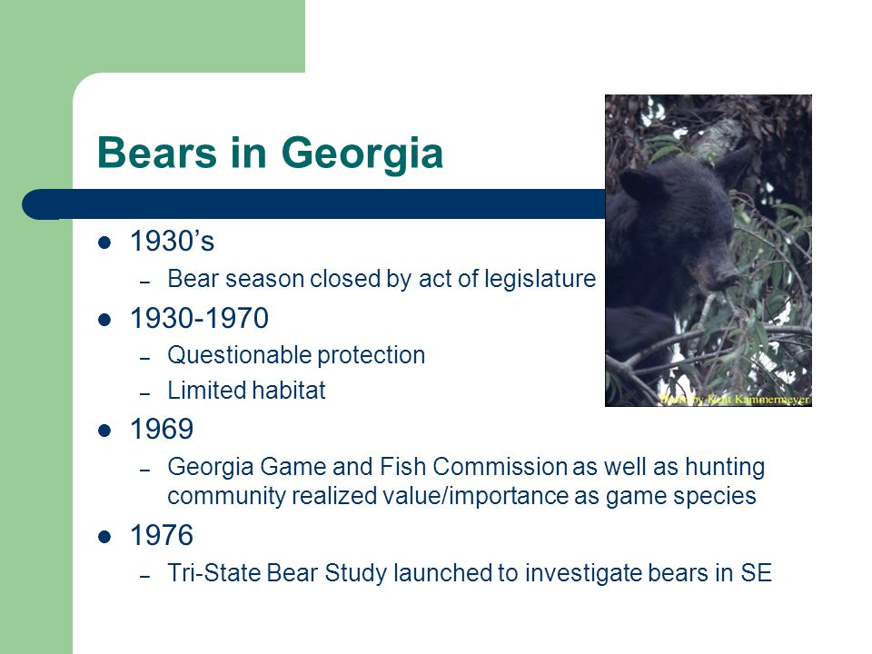 Statewide Black Bear Distribution Approximate Population Size North Georgia 1,200 bears Central Georgia 300 bears South Georgia 800 bears