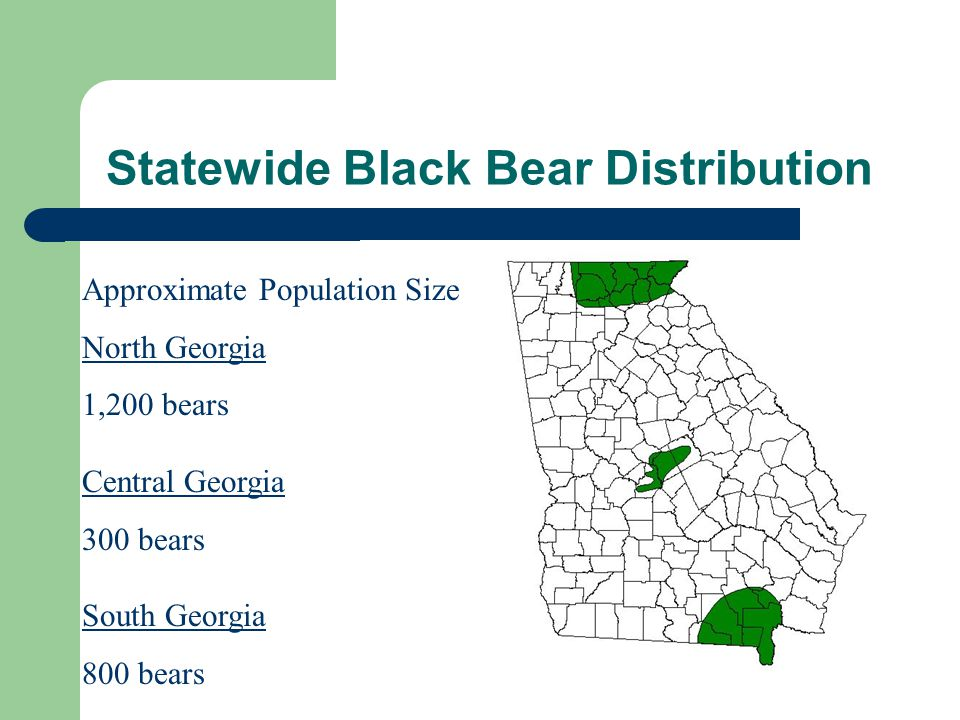 Female Bear Harvest Average Age (1992-2002)