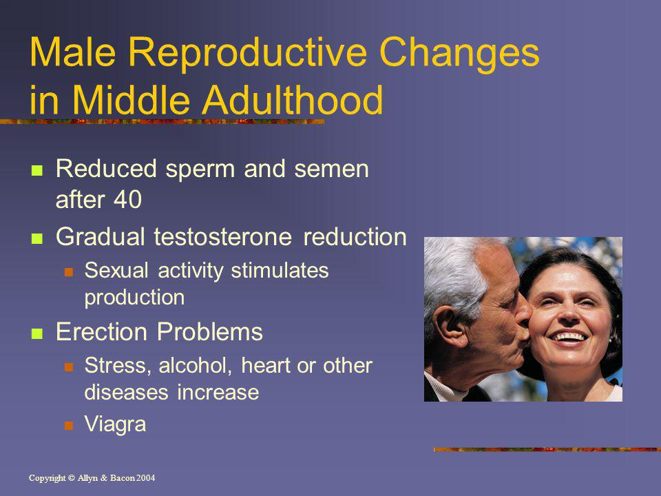 Copyright © Allyn & Bacon 2004 Male Reproductive Changes in Middle Adulthood Reduced sperm and semen after 40 Gradual testosterone reduction Sexual activity stimulates production Erection Problems Stress, alcohol, heart or other diseases increase Viagra