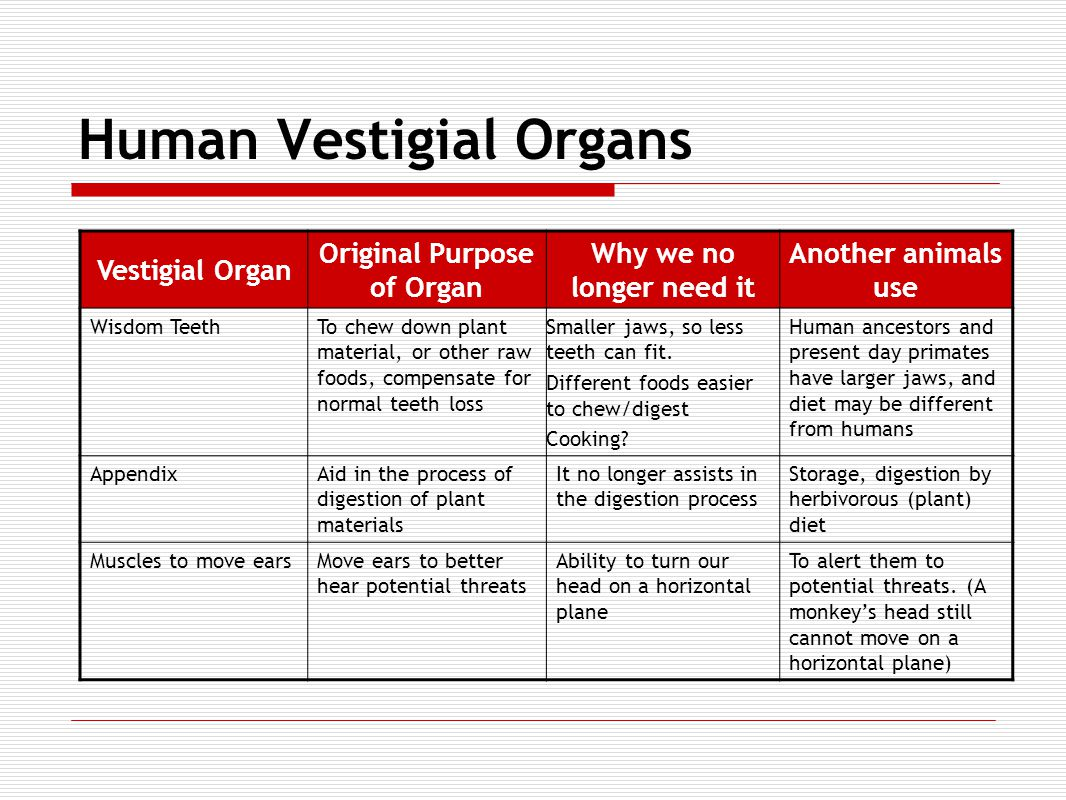 Human Vestigial Organs Vestigial Organ Original Purpose of Organ Why we no longer need it Another animals use Wisdom TeethTo chew down plant material, or other raw foods, compensate for normal teeth loss Smaller jaws, so less teeth can fit.